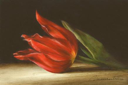 Tanja Moderscheim, Max cramoisi tulip 1700 , 2020