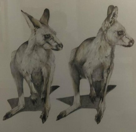 Karen Barbouttis, Grey Kangaroos Featherdale Park, 2018
