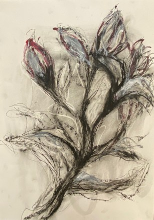 Tracey Levett, Pink Oriental, 2020