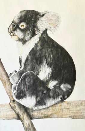 "Karen Barbouttis, ""Montgomery"" Featherdale Wildlife Park"