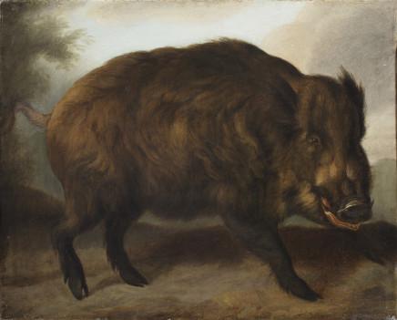 Carl Borromäus Andreas Ruthart, A wild boar