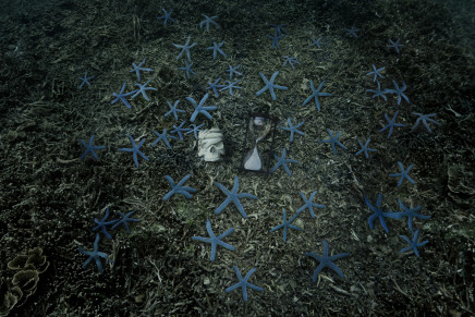Anne de Carbuccia, Blue Stars