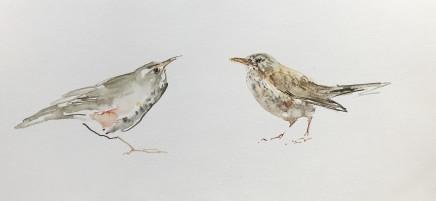 Sue Platt, Soft Redwing, Hard Thrush (62) , 2021