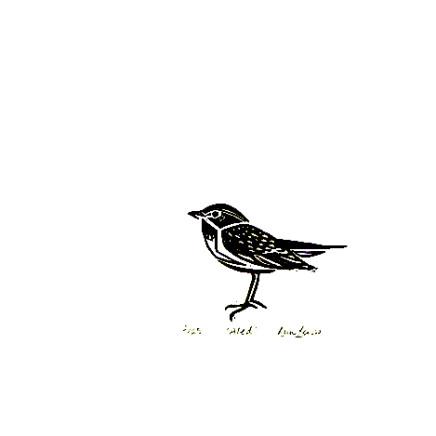 Ann Lewis RCA, Welsh Warblers (Aled)