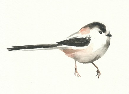 Liam Spencer, Long-Tailed Tit, 2020
