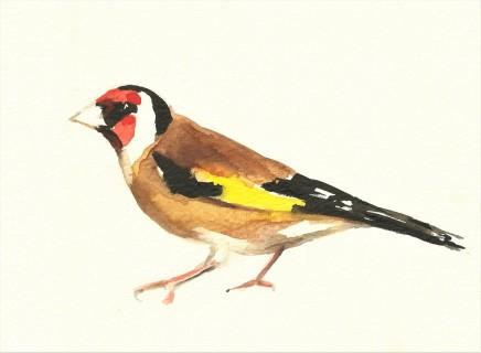 Liam Spencer, Goldfinch
