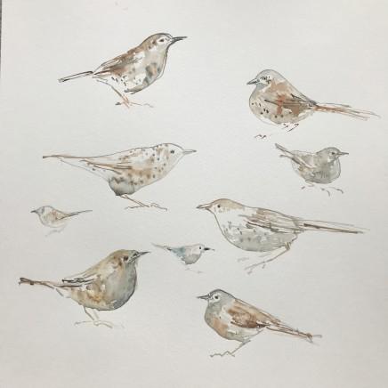 Sue Platt, Quick Thrush Sketches (86), 2021