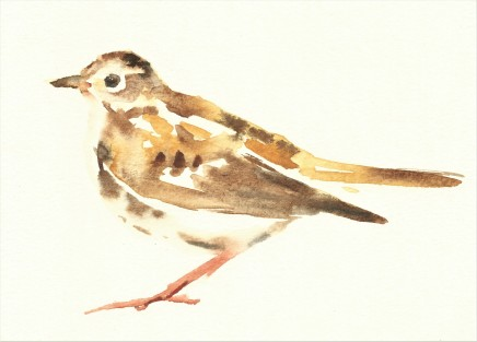 Liam Spencer, Meadow Pipit, 2020