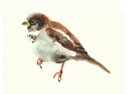 Liam Spencer, Sparrow