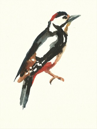 Liam Spencer, Great Spotted Woodpecker, 2020