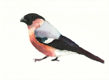 Liam Spencer, Bullfinch (m), 2020