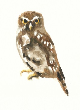 Liam Spencer, Little Owl, 2020