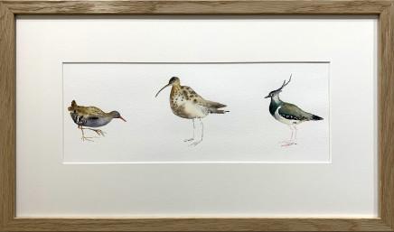Sue Platt, Three Locked in Birds: Water Rail, Curlew, Lapwing (40) , 2020
