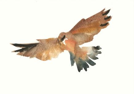 Liam Spencer, Kestrel in Flight