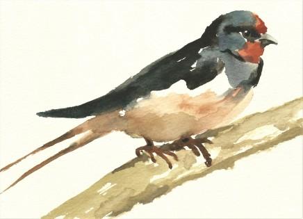 Liam Spencer, Swallow