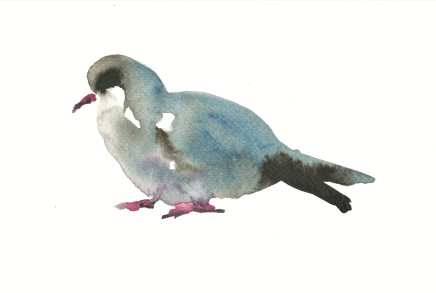 Liam Spencer, Stock Dove