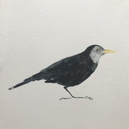 Sue Platt, Blackbird Unmasked (1)