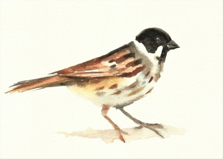Liam Spencer, Reed Bunting 2