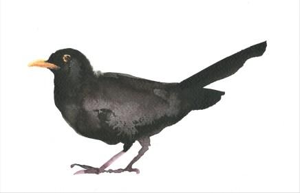 Liam Spencer, Blackbird