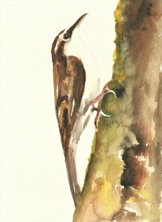Liam Spencer, Tree Creeper 2