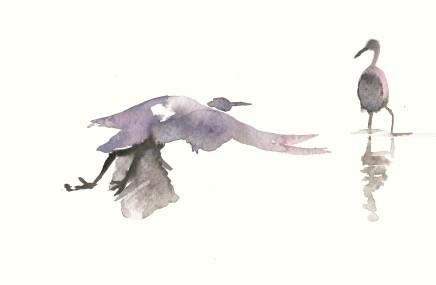 Liam Spencer, Great Egrets, 2020