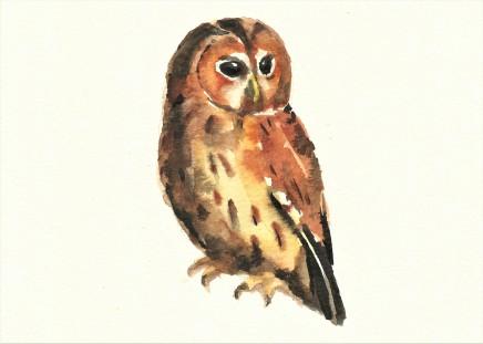 Liam Spencer, Tawny Owl