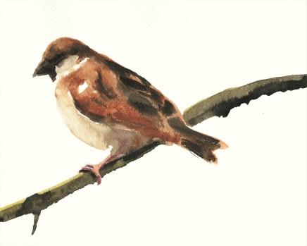 Liam Spencer, Sparrow 2