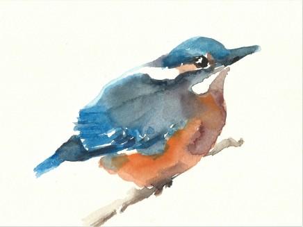 Liam Spencer, Juvenile Kingfisher
