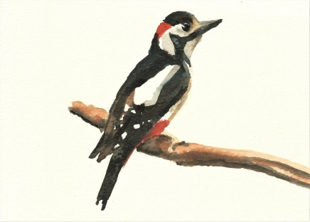 Liam Spencer, Great Spotted Woodpecker 2, 2020