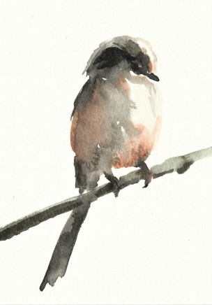 Liam Spencer, Long-Tailed Tit 3, 2020