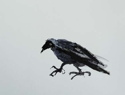 Mary Griffiths, Disgruntled Jackdaw, 2021