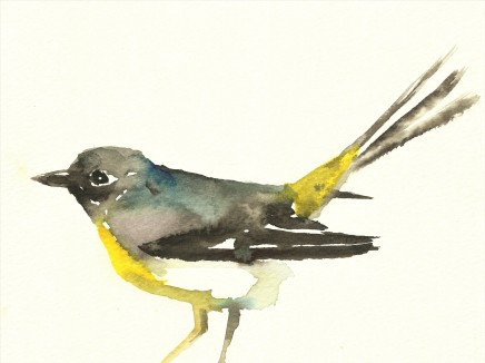 Liam Spencer, Grey Wagtail 2