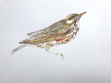 Sue Platt, Elegant Redwing (59), 2021