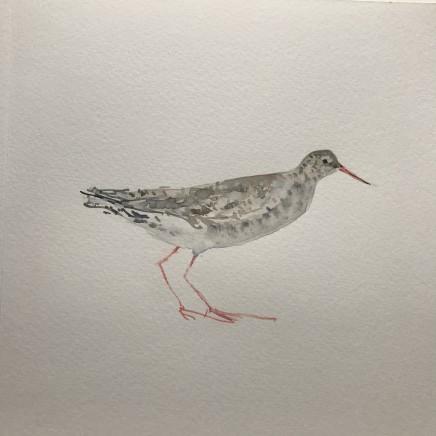 Sue Platt, Timid Redshank (46), 2021