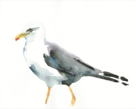 Liam Spencer, Herring Gull