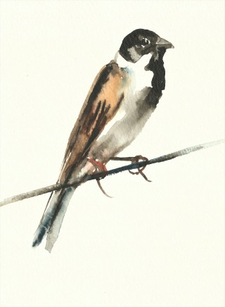 Liam Spencer, Reed Bunting