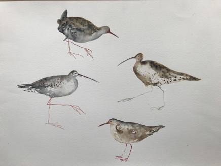 Sue Platt, Curlew, Two Redshank, Water Rail (94), 2020