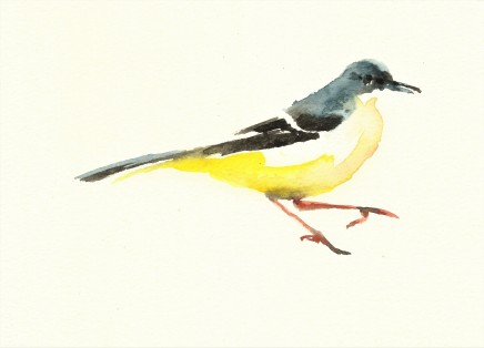 Liam Spencer, Grey Wagtail 3