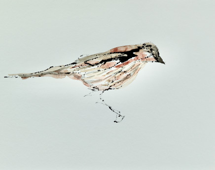 Mary Griffiths, Sparrow, 2019
