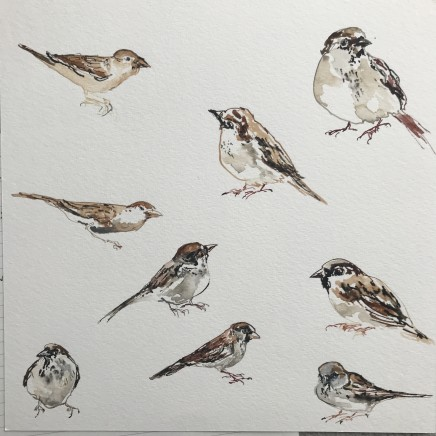 Sue Platt, Busy Porchfield Sparrows (27), 2020