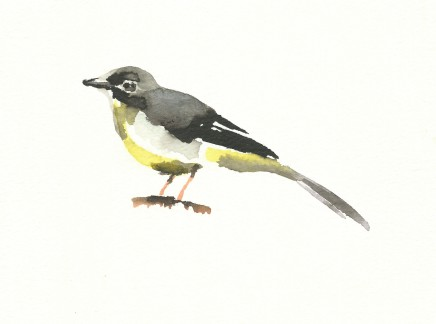 Liam Spencer, Grey Wagtail