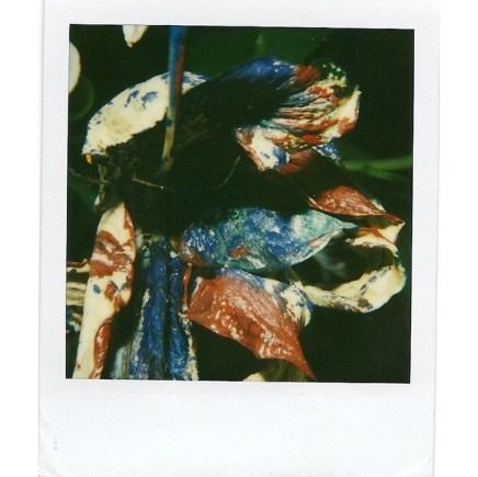 Nobuyoshi Araki, Still Life, 2000-2005
