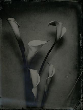 Nicolas Laborie, Lillies, 2017