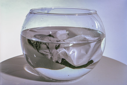 YingYing Shen, A Fishbowl, 2019