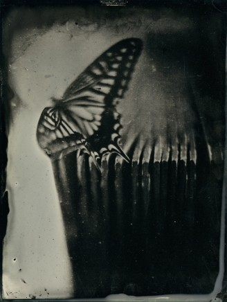 Nicolas Laborie, Butterfly