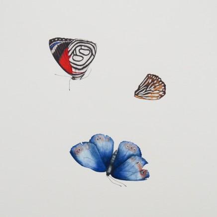Jennifer Hooper, Lepidoptera