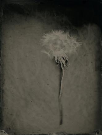 Nicolas Laborie, Wishes III, 2018