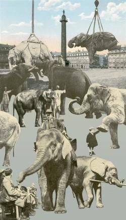 Sir Peter Blake, Elephants, 2011
