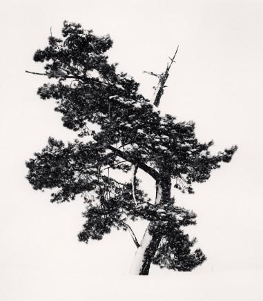 Michael Kenna, Stately Tree in Snowstorm, Asahikawa, Hokkaido, Japan, 2011