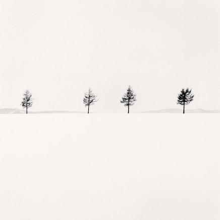 Michael Kenna, Kurosawa's Trees, Study 1, Memanbetsu, Hokkaido, Japan, 2004